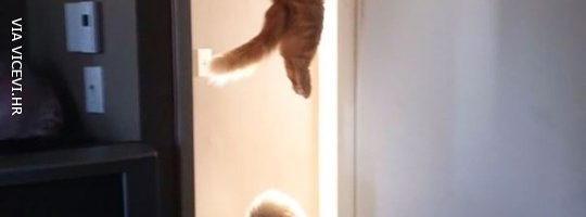 Jel netko vidio mačku