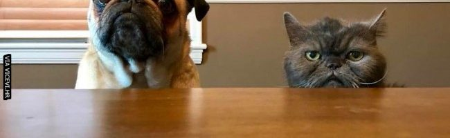 Mačka izgleda kao da je razočarala tatu, a pas zabrinuo mamu