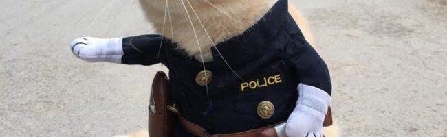 Ovaj mačak me može uhititi ako želi