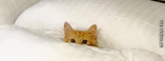 Danas ne izlazim iz kreveta!