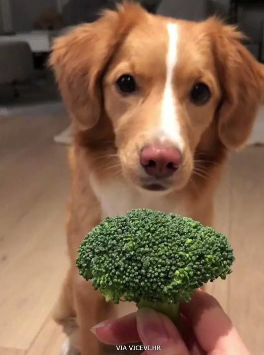 Zar opet brokula?