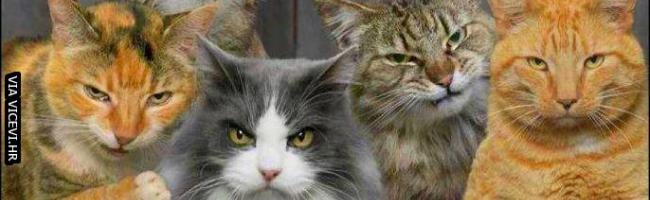 Tko je naljutio moje mace?