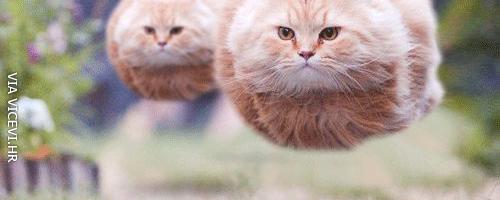 Leteće mačke