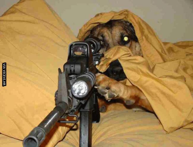 Moj pas svaki put kad netko pozvoni na vrata