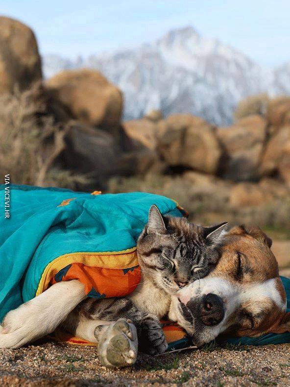Za njih dvoje ne vrijedi izraz da se slažu se kao pas i mačka!